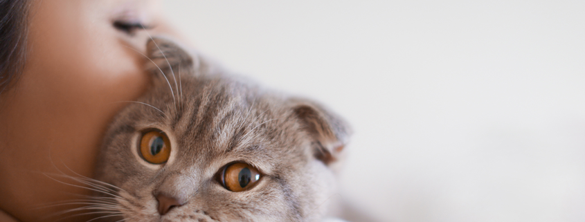 Animal Rescue Foundation   Tulsa, Oklahoma – Finding Great